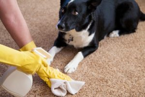 carpet cleaning red oak tx 7